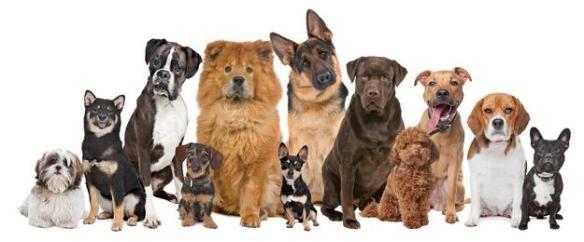 psy-pies-zwierzeta-pupil_25907703